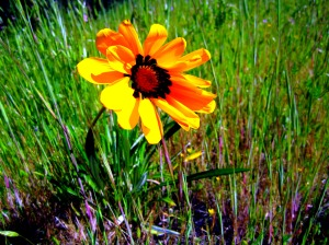 Flower at Daly Ranch