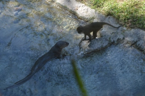 Otter and Monkey